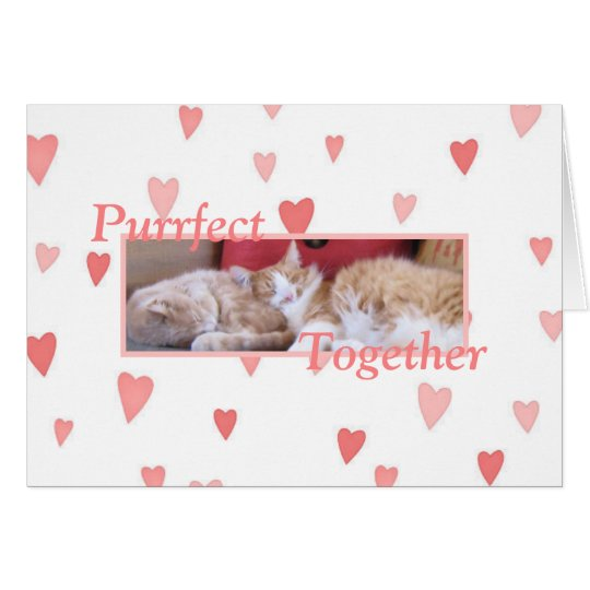 Snuggling cats Valentine's Day card