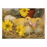 Snuggling Ducklings Greeting Card