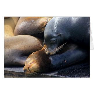 Snuggling I Sea Lion Photo Greeting Card