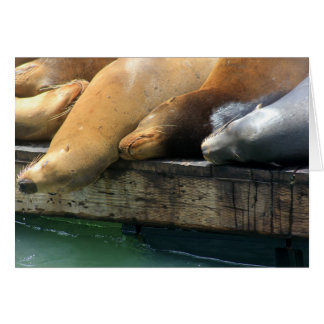 Snuggling III Sea Lion Photo Greeting Card
