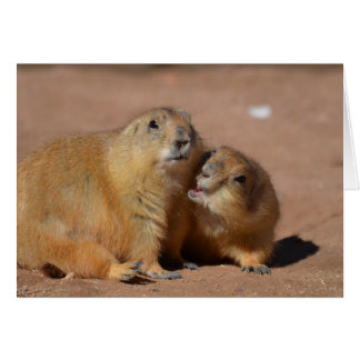Snuggling Prairie Dogs Greeting Card