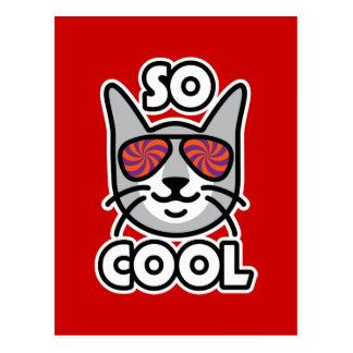 SO COOL Cat Postcard