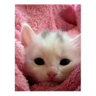 So So So Cute Kitten in blanket Postcard