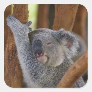 So Sweet Koala Bear Sticker