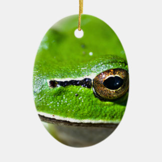 So you are a Frog Ceramic Oval Decoration