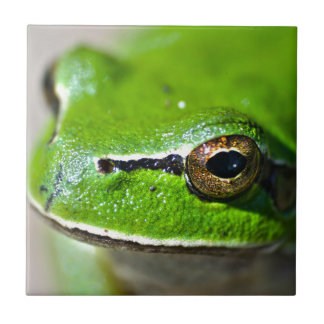 So you are a Frog Small Square Tile