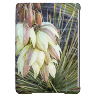 Soaptree Yucca Flowers In The Upper Missouri