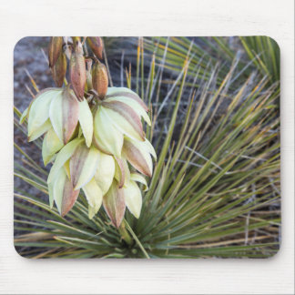 Soaptree Yucca Flowers In The Upper Missouri Mouse Mat