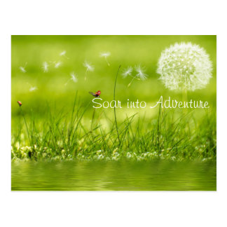 Soar into Adventure Postcard
