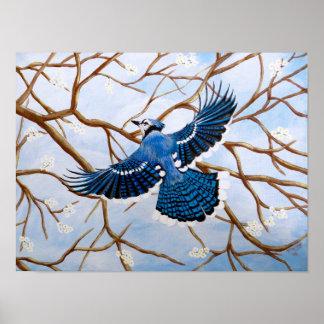 Soaring Blue Jay Poster