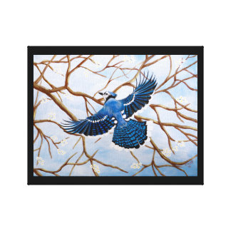 Soaring Blue Jay Stretched Canvas Print