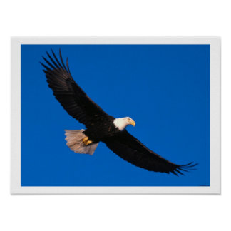 Soaring Eagle Art Print Poster
