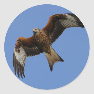 Soaring Red Kite Classic Round Sticker