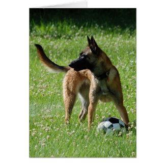 Soccer Malinois Greeting Card