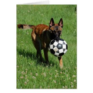 Soccer Malinois Greeting Cards