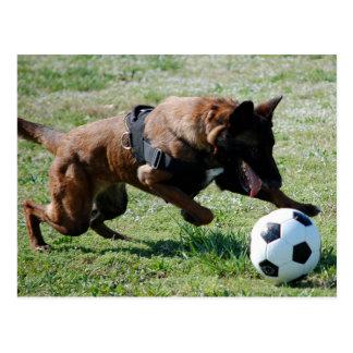 Soccer Malinois Post Card