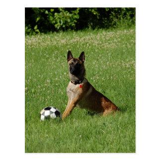 Soccer Malinois Postcard