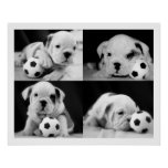 """""""Soccer Puppies"""" English Bulldog Collage Posters"""