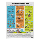 Socialising Your Dog Poster