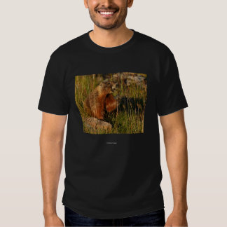 Socrates T-shirts