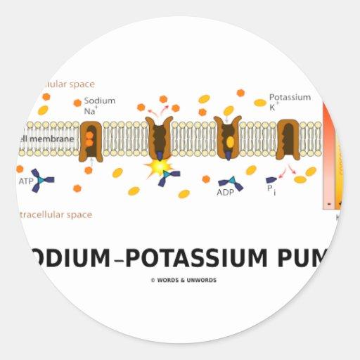 Sodium-Potassium Pump (Active Transport) Round Sticker