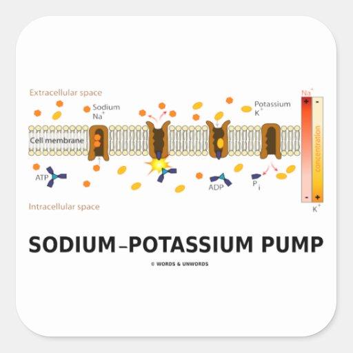 Sodium-Potassium Pump (Active Transport) Sticker