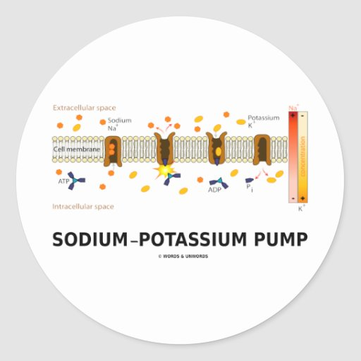 Sodium-Potassium Pump (Active Transport) Round Stickers