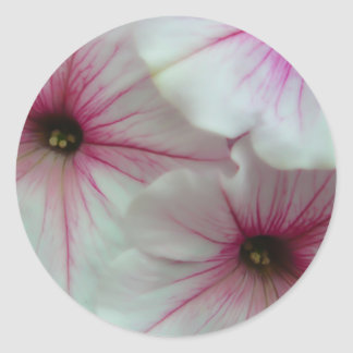 Soft and Delicate White and Pink Petunias Sticker