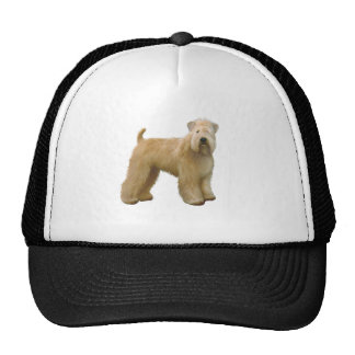 Soft Coated Wheaten Terrier (A)  - stand Cap