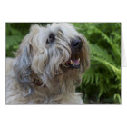 Soft Coated Wheaten Terrier Birthday Card