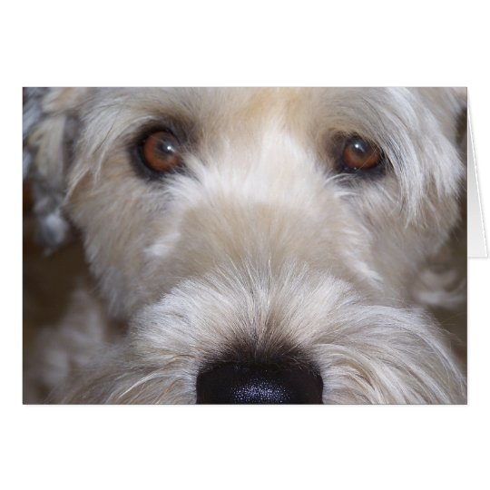 Soft Coated Wheaten Terrier Card