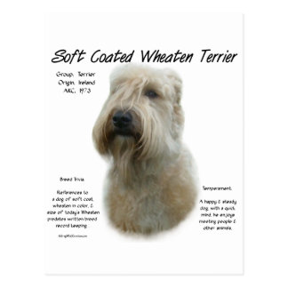 Soft Coated Wheaten Terrier History Design Post Cards