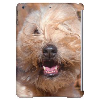 Soft Coated Wheaten Terrier portrait