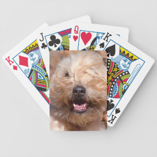 Soft Coated Wheaten Terrier portrait Bicycle Playing Cards