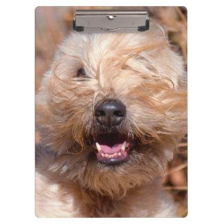 Soft Coated Wheaten Terrier portrait Clipboard