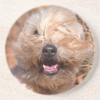 Soft Coated Wheaten Terrier portrait Coaster