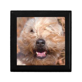 Soft Coated Wheaten Terrier portrait Gift Box