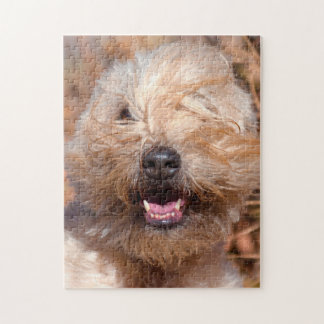Soft Coated Wheaten Terrier portrait Jigsaw Puzzle