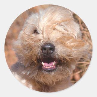 Soft Coated Wheaten Terrier portrait Round Sticker