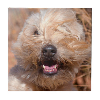 Soft Coated Wheaten Terrier portrait Tile