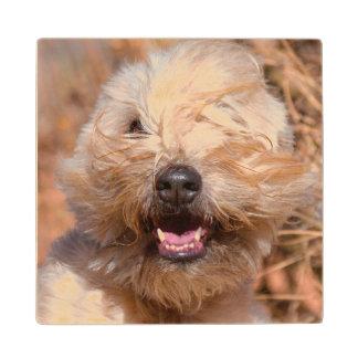 Soft Coated Wheaten Terrier portrait Wood Coaster