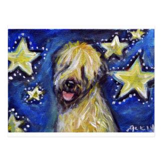 Soft Coated Wheaten Terrier Stars Postcard