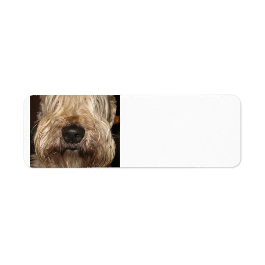 soft coated wheaton terrier.png return address label