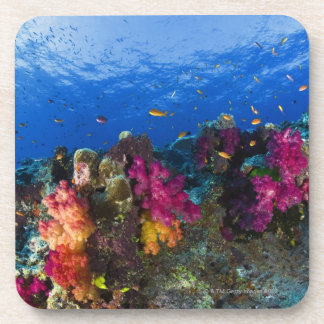 Soft corals on shallow reef, Fiji Coaster