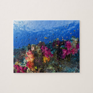 Soft corals on shallow reef, Fiji Jigsaw Puzzle