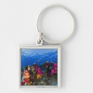 Soft corals on shallow reef, Fiji Key Ring