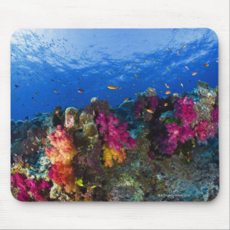 Soft corals on shallow reef, Fiji Mouse Mat