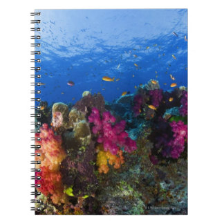 Soft corals on shallow reef, Fiji Notebooks