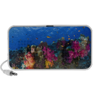 Soft corals on shallow reef, Fiji Notebook Speakers