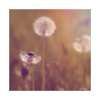 Soft Dandelion Flower and Seeds in Grass Muted Canvas Print